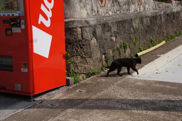 首里城附近的小黑貓。